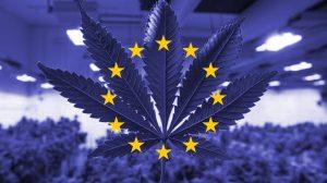 Cannabis per Uso Medico: il Parlamento EU chiede regole europee