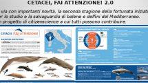 CETACEI, FAI ATTENZIONE! 2.0