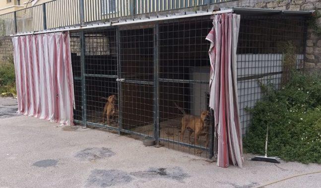 pittbull combattimento cani foto free facebook