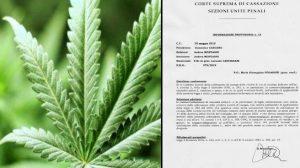 """""""Cannabis Light"""":confusione dopo la sentenza della cassazione del 30 maggio"""