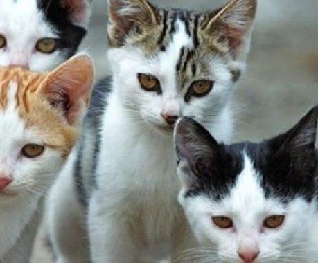 gatti sorrento foto free
