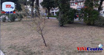 Aiuole secche, una delle vittime, un albero secco