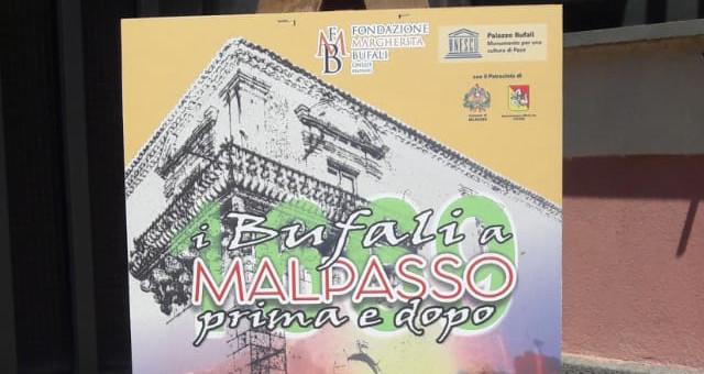 Bufali a Malpasso