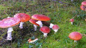 Funghi 1 (Foto da Min Salute)