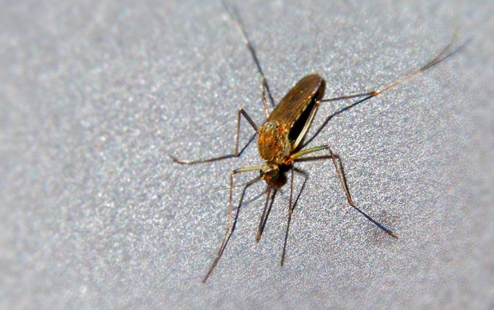 castellammare zanzare insetti foto free google