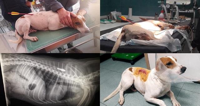 Cane ferito nel ragusano