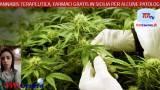 intervistato in merito la vicepresidente del Comitato Pazienti Cannabis Medica, Santa Sarta