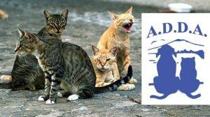 logo associazioe e gatti