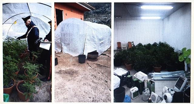 Piantagione marijuana scoperta a SEZZE dai Carabinieri