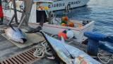 La pesca illegale di tonno rozzo senza alcuna autorizzazione