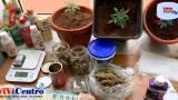 Arrestato un 23enne a Bagnoli, coltiva piante di marijuana in casa