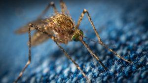 Zanzare ekamelev-sZIjgg4Peu0-unsplash
