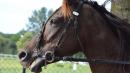 equitazione parco tematico animali sant antonio abate foto free google