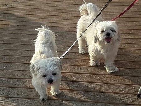 Giornata Internazionale del Cane - In Italia richiesta di riduzione IVA