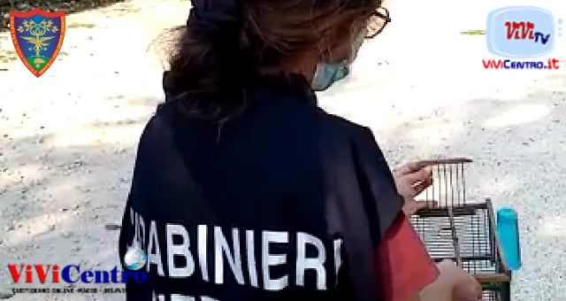 """ERCOLANO: 84enne scivola in un burrone cercando funghi Regione Carabinieri Forestale """"Campania"""" Gruppo di Napoli Nucleo CITES"""