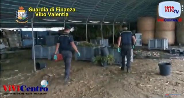 Vibo Valentia, sequestrati 6 quintali di marijuana e 5200 piantine