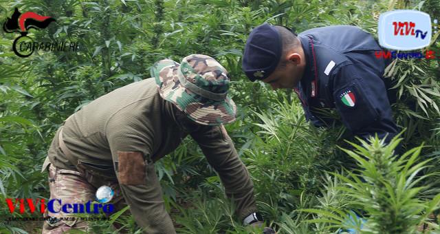 Arrestato 40enne di Dolianova (NU), custodiva campo di marijuana