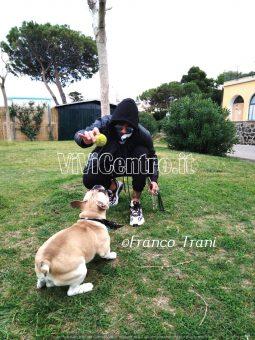 La Fotonotizia- Ischia: bomber Saurino gioca con un nuovo attaccante
