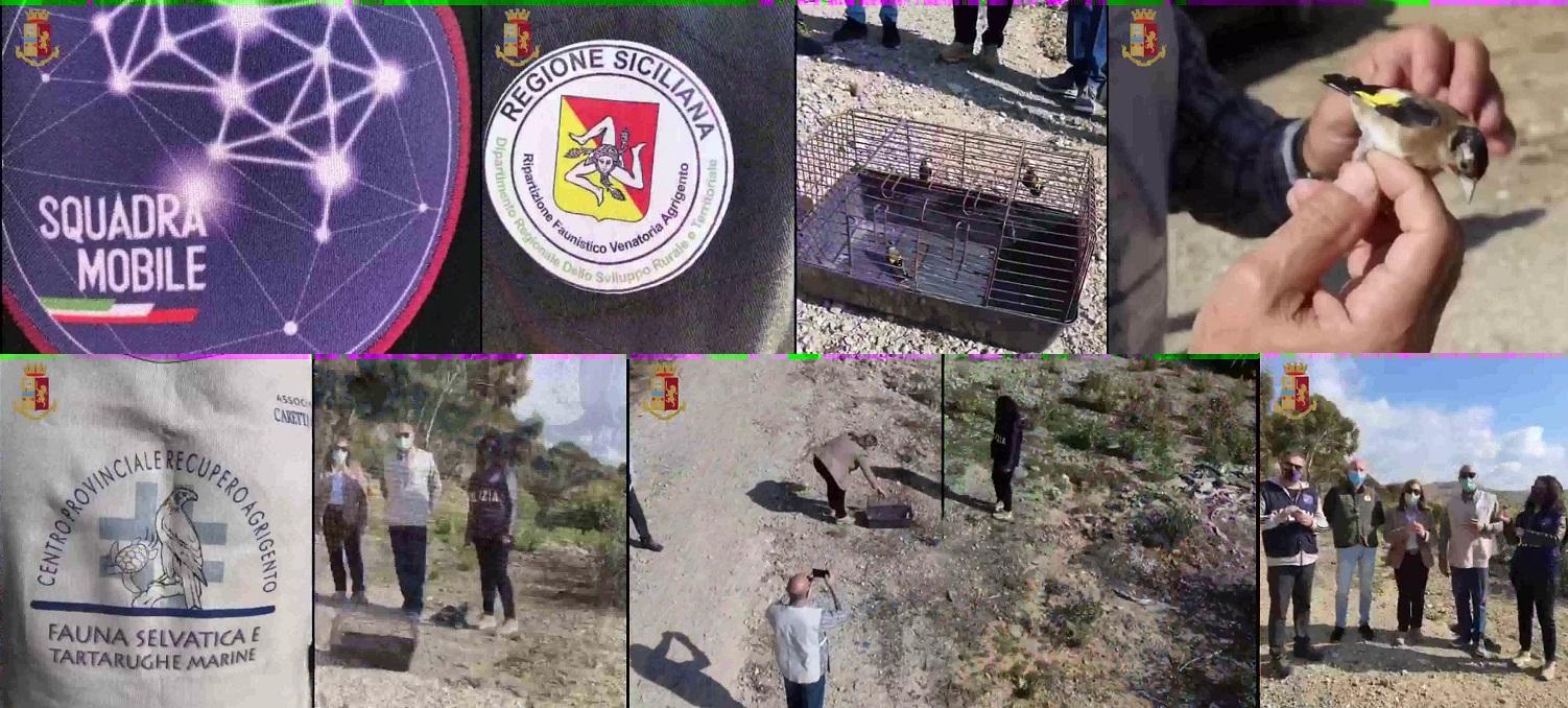 La Polizia di Stato di Agrigento ha liberato i cardellini
