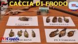 Verolanuova (BS), CACCIA DI FRODO