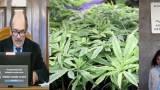 Legalizzare la cannabis sottrarrebbe risorse illecite alle mafie