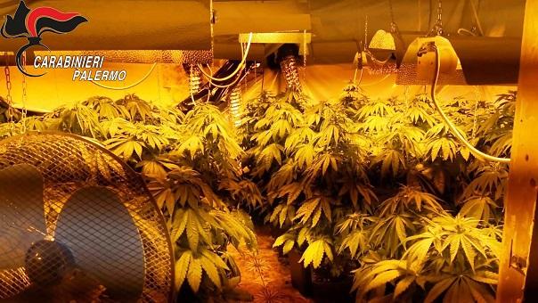 """Arrestati dai CC di Palermo per la coltivazione """"indoor"""" di marijuana in una villetta"""
