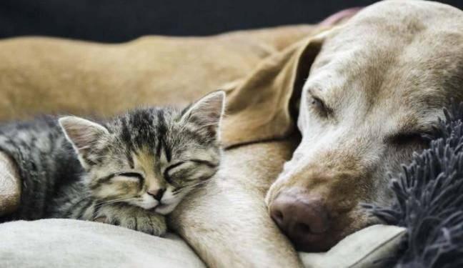 cani e gatti garante animali torre del greco foto free