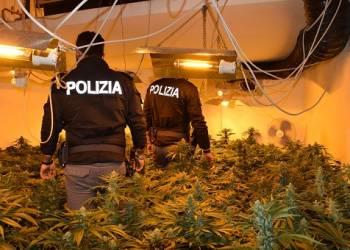 scoperto ieri una piantagione di marijuana in una abitazione