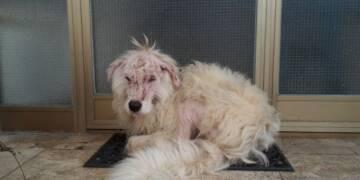 Carabinieri Forestali - cane maltrattato