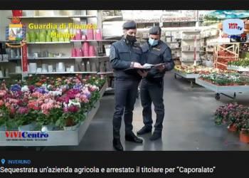 """Sequestrato un vivaio di Inveruno, arrestato il titolare per """"Caporalato"""""""