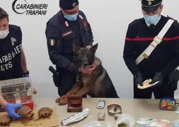 Erice arrestati marito moglie e denunciato il figlio 20enne per spaccio e possesso di animali di specie protette