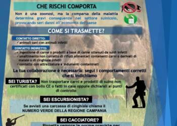 Peste suina africana: il vademecum Oev Campania
