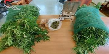 arrestato ai domiciliari 30enne del luogo per coltivazione di cannabis indica e furto di elettricità