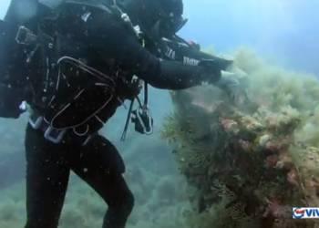 Giornata Mondiale degli Oceani, campagna Mare Pulito della Guardia Costiera