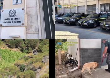 La GdF di Catania e Paternò ha scoperto in un campo a Bronte (CT) una piantagione