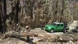 Sono già operativi 25 operai forestali dell'Arma, giunti da varie regioni d'Italia
